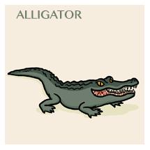 alligator-sm