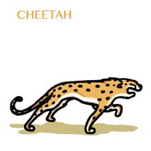 cheetah-sm