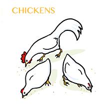 chicken-sm