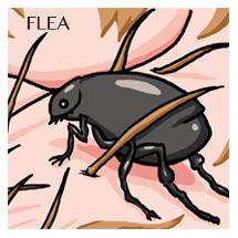 flea-sm