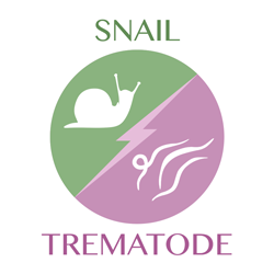 snail vs trematode icon
