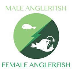 anglerfish-anglerfish