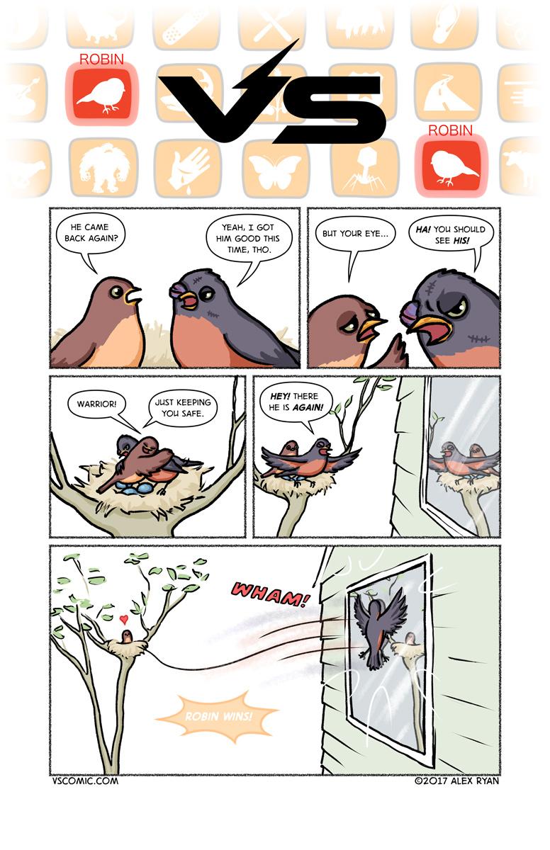 robin-vs-robin